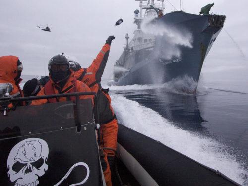 5% des bénéfices reversé à Sea Sheperd